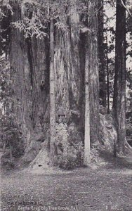 Cathedral Santa Crug Big Tree Grove California