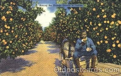 Orange groves in Florida, USA Black, Blacks Postcard Post Card  Orange groves...
