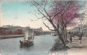 uk41927 cherry blossom at horiwari negrishi yokohama
