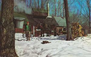Maple Sugar Time in Vermont - Horses and Sugar House