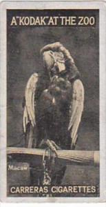 Carreras Cigarette Card Kodak At Zoo 1st Series No 1 Macaw