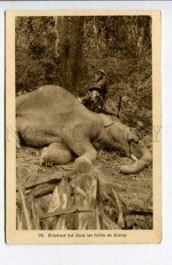 424034 VIETNAM Wild elephant hunting Vintage SAIGON postcard