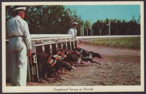 Greyhound Racing in Florida Postcard