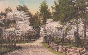 North Carolina Southern Pines Springtime Albertype