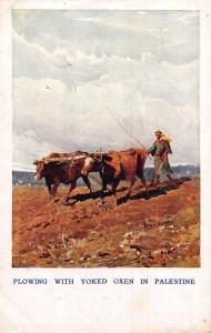 Plowing With Yoked Oxen in Palestine Postcard