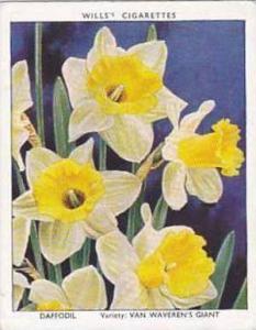 Wills Vintage Cigarette Card Garden Flowers 1938 A Series No 9 Daffodil Van W...