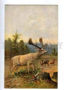 132456 HUNT Deer & Mushrooms by MULLER vintage color PC