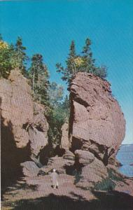 Canada New Brunswick Hopewell Peace Tranquility Rest And Mature At Its Best