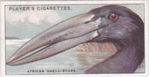Player Cigarette Card Curious Beaks No 47 African Shell Stork