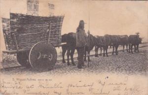 Azores San Miguel Carro de Bol Ox Cart 1905
