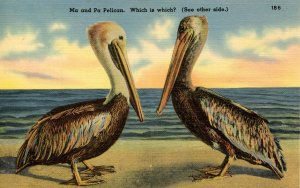 Ma and Pa Pelican