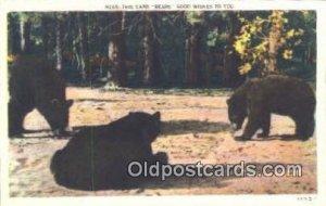 Bear, Black and Brown Bear Unused