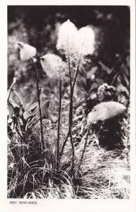RP; Bear Grass, PU-1952
