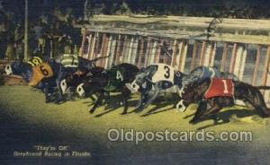 Greyhounds, FL USA Dog Racing, Old Vintage Antique Postcard Post Card  Greyho...