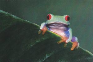Green Frog on Leaf , Postcard #11
