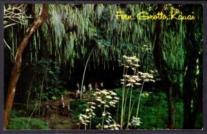 Fern Grotto,Kauai,HI