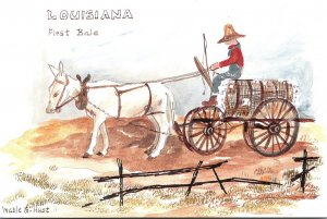 Louisiana First Bale Donkey Pulling Cart Full Of Cotton By Mable G Hust