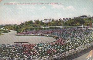 New Jersey Newark Horseshoe Bed Of Geraniums Branch Brook Park 1908