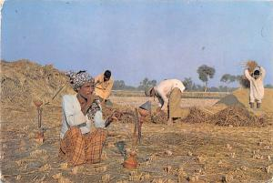 Pakistan Old Vintage Antique Post Card Typical Farmer 1976