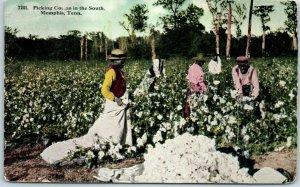 1910s MEMPHIS, Tennessee / Black Americana Postcard Cotton Field Scene Unused