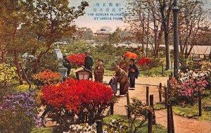 Japan The Azalea Blossomns At Hibiya Park Promenade Postcard