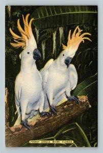 Miami FL, Cockatoos At Parrot Jungle, Linen Florida Postcard