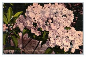 21270   FLOWERS  Mountain Laurel