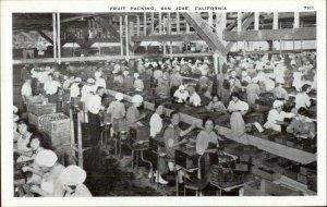 San Jose CA Fruit Packing Labor Work Agriculture Postcard