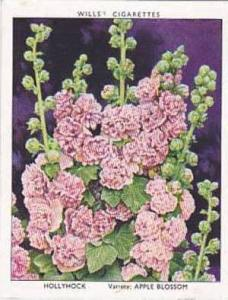 Wills Vintage Cigarette Card Garden Flowers 1938 A Series No 17 Hollyhock App...
