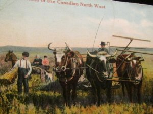 First year on the homestead in the Canadian North West