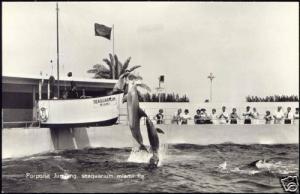 Miami, Fla., SeaQuarium Porpoises 60s Dutch Ed. RPPC