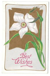 Best Wishes Narcissus Daffodil Vintage Embossed Postcard