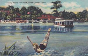 Florida Silver Springs Beauty Above And Below Curteich