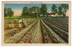 Maine Potato Farm