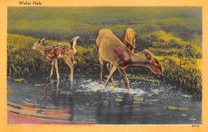 Deer Post Card Water Hole Unused