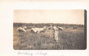 Real Photo Post Card~Lil Boy w/ Staff Herding Sheep~Big Lambs~Corn Field~1912