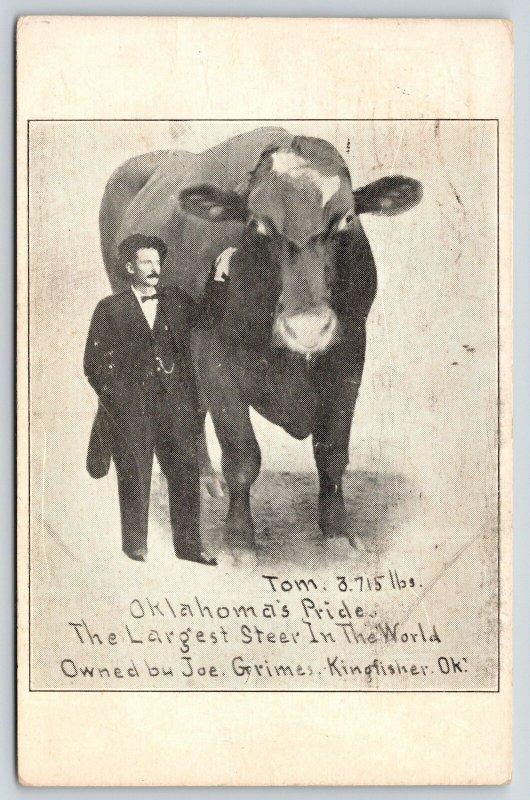 Kingfisher Oklahoma~Owner Joe Grimes & Tom~Largest Steer in World~1913 Postcard