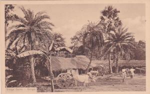 Village Scene , BENGAL, India ,10s-20s; Oxen
