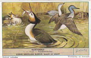 Liebig Trade Card S1634 Diving Birds No 1 Fuut Roodkeelduiker