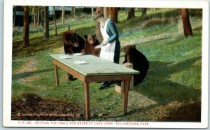 1910s Yellowstone Postcard Setting the Tables for Bear at Lake Camp Curteich