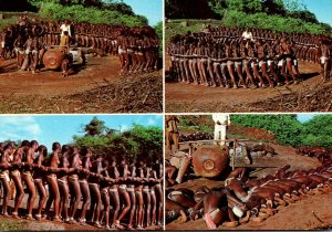 South Africa Bantu Life Domba Dancers Of The Venda Tribe Performing The Snake...