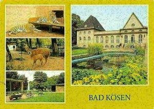 Bad Koesen Tierpark Tiger, Lama mit Jungem Im Tiergehege, Animals