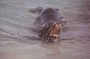 Galapagos Islands , Ecuador , PU-1982 Seal