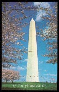 Washington Monument - Cherry Blossom Time