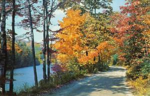 Vivid River Road In Autumn, Vermont/VT Postcard, Near Mint!