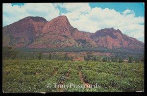 Mlanje Mountain and Tea State
