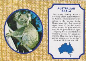 Koala , Australia , 50-70s