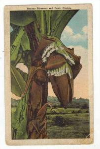 Banana Blossoms & Fruits, Florida, 1900-1910s