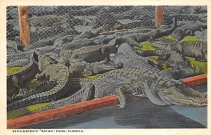 Alligator Post Card Reddington's Gator Farm Florida, USA Unused