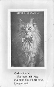 Cat Post Card Old Vintage Antique Silver Jessamine 1911